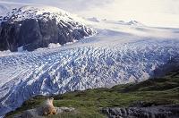 アラスカ キーナイ・フィヨルド国立公園