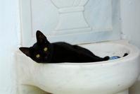 ギリシャ 大理石の水入れの中に入ってる黒猫