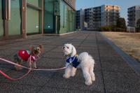 神奈川県 犬の散歩