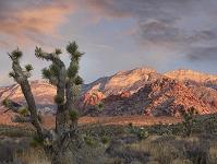 ラスベガス  レッド ロック キャニオン国立保護区