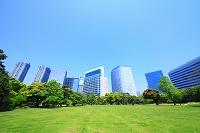 東京都 中央区 浜離宮恩賜庭園 広場と汐留シオサイトのビル群