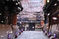 京都府 祇園白川 桜咲く石畳の町並みと巽橋