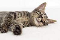 横になって眠る猫