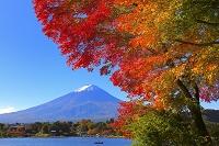 山梨県 冠雪した富士山と河口湖畔の紅葉