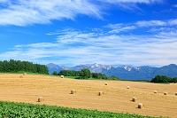 北海道 収穫された麦畑と十勝岳連峰