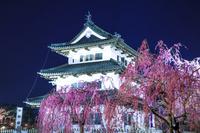 青森県 弘前城と桜の夜景
