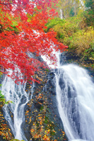 秋田県 七滝とモミジ