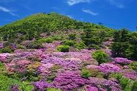 長崎県 ミヤマキリシマ咲く仁田峠から雲仙岳