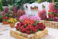 秋の庭 ( 風車菊などの花 )