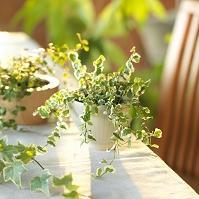 光のあたる観葉植物