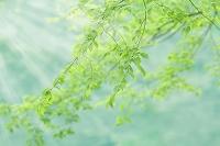 新緑と太陽光