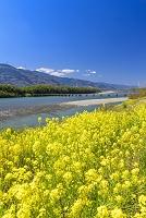 徳島県 美馬市 吉野川と脇町潜水橋