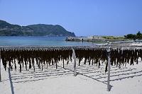 兵庫県 竹野町 ワカメの天日干し