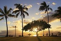 ヤシの木 パームツリー 夕陽のカイマビーチ