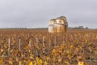フランス シャトー・ダルサックの葡萄畑
