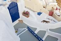 ギリシャ サントリーニ島 猫