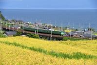 滋賀県 湖西線 琵琶湖沿いの色づいた田園地帯を走る117系普通電車