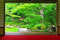 日本 京都府 新緑の無鄰菴(山形有朋の別邸)