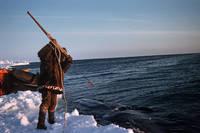 杜を構えて鯨を捕らえようとするイヌピアト