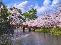 青森県 弘前公園 桜