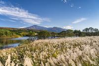 秋田県 冬師湿原のススキと鳥海山