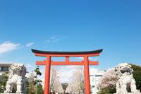 神奈川県 鎌倉市 鶴岡八幡宮