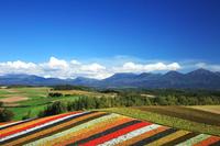 北海道 十勝連山と紅葉四季彩の丘