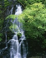 福井県 新緑の龍双ヶ滝