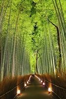 京都府 嵐山花灯路 ライトアップされた竹林の小径
