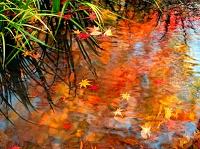 水面に浮かぶ紅葉