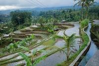 インドネシア バリ島 ジャティルイ棚田