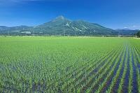 福島県 猪苗代町 磐梯山と田園
