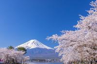 山梨県 河口湖から桜と富士山