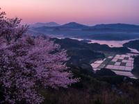 長崎県 大山公園の桜