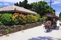 沖縄県 竹富島の民家と水牛