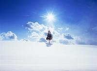 北海道・美瑛町 一本の木