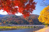 京都府 紅葉の嵐山渡月橋