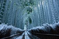 京都府 嵯峨