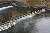静岡県 吉田町 ゴミで汚れる川