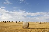 ドイツ 麦畑と麦ロール