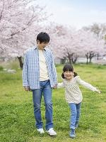 桜と笑顔で手を繋ぐ日本人親子