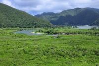 鹿児島県 住用町のマングローブ