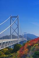 広島県 因島 紅葉と因島大橋
