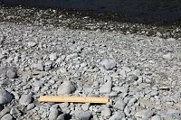 多摩川 下流の石(30cmものさし) 2009.03.02 東京都 府中市