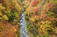 福島県 秋の中津川渓谷
