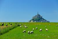 モンサンミッシェルと牧場と羊