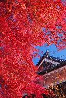 長野県 紅葉の上田城