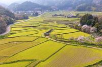 大分県 春の田染荘小崎の農村景観
