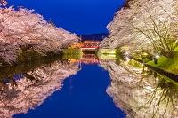 山形県 松ヶ岬公園の夜桜