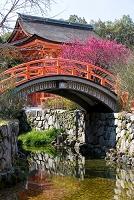 京都府 下鴨神社 光琳の梅 輪橋